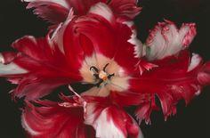 Resultado de imagen de araki flowers photos