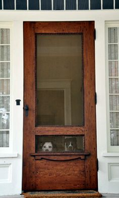 Screen Door for the Dog. It's cute, although King can see out of a regular screen door because he is so tall.
