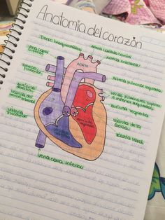 Human heart and its parts (cardiology) Medicine Notes, Medicine Student, Science Biology, Medical Science, Nursing School Notes, Study Techniques, Medical Anatomy, School Study Tips, Study Notes
