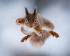 Squirrel Kung Fu