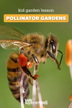 A pollinator garden can help struggling native pollinator populations and give students a chance to be environmental stewards. This garden lesson lets students research, observe, and explore their schoolyard habitat and local pollinators. Bee Facts For Kids, School Gardens, Bug Hotel, Bumble Bees, Honey Bees, Lessons For Kids, Garden Projects, Agriculture, Biology