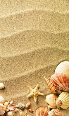 Shells and sand phone wallpaper Summer Wallpaper, Cool Wallpaper, Beach Wallpaper, Cellphone Wallpaper, Iphone Wallpaper, Phone Backgrounds, Wallpaper Backgrounds, Belle Image Nature, Orange Aesthetic