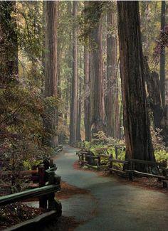 Redwood   paved path