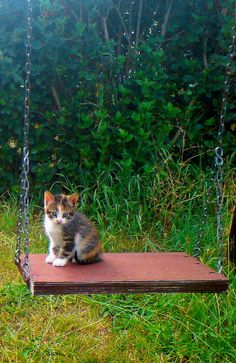 Kitten on a swing.. (by mariuca.l on Flickr)