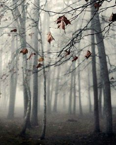 Autumn haze.