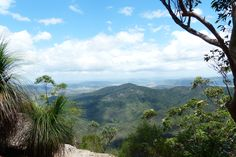 """Xanthorrhoea plant overlooks views from Somerset Trail lookout, D'Aguilar Range.. The """"grass tree"""" is endemic to Australia"""