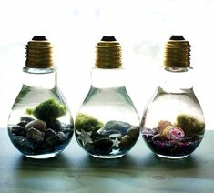 Easy DIY Light Bulb Aquarium These easy DIY light bulb aquariums make a great home for tiny Japanese Marimo moss balls and are super cute as homemade Christmas gifts! Want great tips regarding arts and crafts? Head to our great site! Crafts To Make And Sell, Easy Diy Crafts, Cute Crafts, Upcycled Crafts, Cute Diys, Homemade Gifts For Friends, Light Bulb Crafts, Light Bulb Art, Marimo Moss Ball