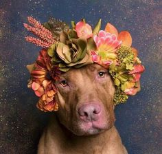 Dog wearing flowers on its head