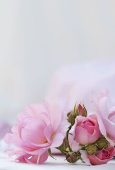 Flower Background Wallpaper, Flower Phone Wallpaper, Flower Backgrounds, Pink Wallpaper, Cellphone Wallpaper, Wallpaper Backgrounds, Iphone Wallpaper, Love Flowers, Beautiful Flowers