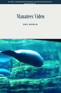 Manatees - So I Was Thinking Manatees, Sea World, Wild Life, Creative Writing, Waterfalls, Rivers, Lakes, Storytelling, Whale