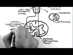 Spinal Pathways 4 - Corticospinal Tract - YouTube
