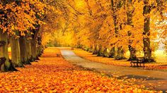 Other Autumn Park Path Sidewalk Trees Benches Fall Leaves Walkway Wallpaper Background Free