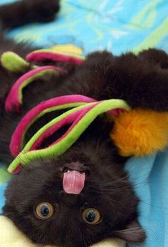 Silly little black cat!