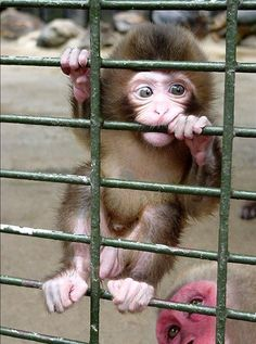 Cute Baby Monkey, Cute Baby Animals, Animals And Pets, Funny Animals, Funny Cats, Primates, Tier Fotos, Cute Animal Pictures, Random Pictures