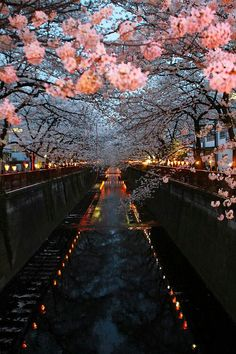 Kyoto!