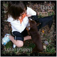 The kids love my grand daughter. . . . #AbaRose #granddaughter #Data #Lutan #MinPin #family #dogs #MinPinCountry #mamasboys #puppylove #outdoors #nature #mybackyard #80acres #80acresforsale #samsungcameraphone