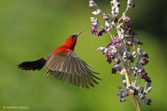 hummingbird video pinterest | Found on 500px.com