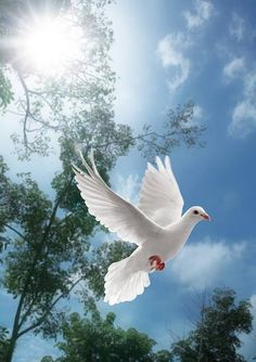 On the wings of a snow white dove, He sends His pure sweet love. A sign from above on the wings of a dove.