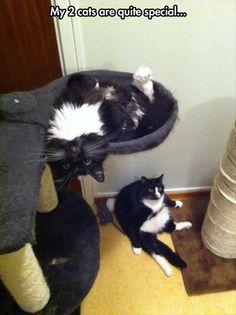 Funny Cats Fuel The Internet - 20 Pics