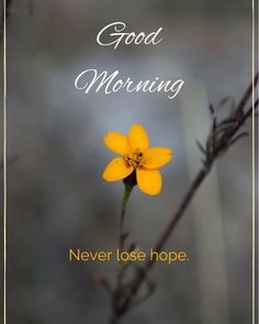Are you looking for images for good morning motivation?Check out the post right here for unique good morning motivation inspiration. These hilarious images will make you happy. Beautiful Morning Quotes, Good Morning Quotes For Him, Good Day Quotes, Good Morning Texts, Good Morning Funny, Good Morning Inspirational Quotes, Good Morning Sunshine, Good Morning Picture, Good Morning Messages