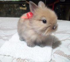 Fotos tiernas de conejos lindos 5