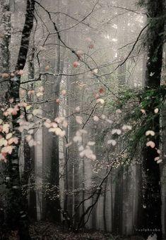 #dream #forest #trees #autumn #tumblr