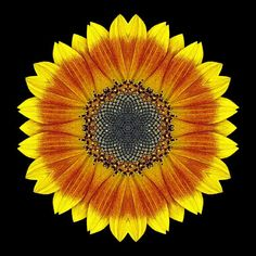 Sunflower mandala. // #sunflower #mandala #spiritualists