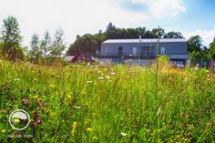 #landscape #architecture #garden #meadow Meadow Garden, Landscape Architecture, Land Scape, Blog, Mountains, Nature, Travel, Instagram, Atelier