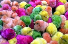 Colorful chicks.  I remember getting one of these every Easter when I was a kid.  It's against the law to sell them now due to the dyes used. You can do it yourself with Kool-aid & it doesn't hurt the chick.  Make sure you have a plan for it once it is grown.  As cute as they are, they WILL grow into a chicken.