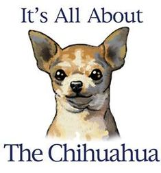 It's All About The Chihuahua