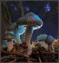 Zauberwald mit Pilzen
