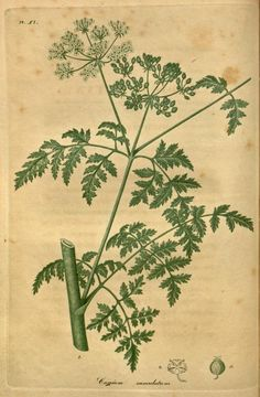 1817-20 - American medical botany :being a ... -  by Jacob Bigelow.