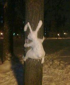 Crash Bunny
