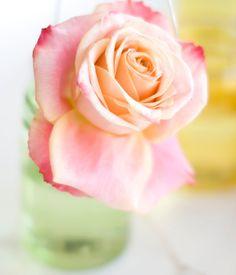 A rose of perfection (via decor8)