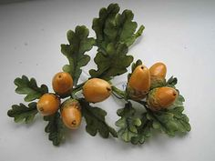 Today thousands of acorns are falling to the ground from the oak trees in only one yard (Law #3).