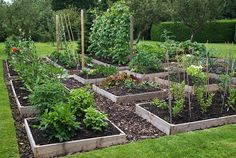 Raised Vegetable Garden Beds Can Be A Great Gardening Option Plants, Orchard Garden, Succulents Garden, Succulent Garden Landscape, Vegetable Garden Design, Garden Planning, Garden Design, Vegetable Garden Raised Beds, Garden