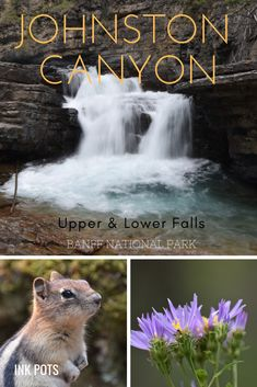 Die dag zijn we vroeg opgestaan, want we gingen naar de prachtige watervallen van Johnston Canyon in Banff National Park... #JohnstonCanyon #Wandeling #UpperFalls #Banff Johnston Canyon Banff, Banff National Park