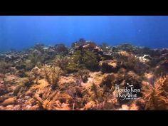 Dive The Florida Keys, Davis Reef, Tavernier Islamorada - http://www.florida-scubadiving.com/florida-scuba-diving/dive-the-florida-keys-davis-reef-tavernier-islamorada/