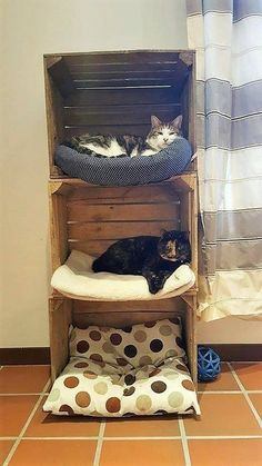 A playful and funky design of wooden pallet pet house is in this . - bed ideas - A playful and funky design of wooden pallet pet house is in this A playful and funky - Wood Pallet Recycling, Cat Shelves, Cat Enclosure, Cat Room, Cat Condo, Funky Design, Pet Furniture, Furniture Ideas, Pet Beds