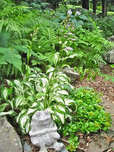 Hostas are one of the commonly chosen perennial plants for gardens. There are numerous species of these plants, from which you need to choose the ones suitable for your garden. Hosta Gardens, Garden Pictures, Garden Paths, Beautiful Gardens, Barber, Perennials, Heaven, Action, Landscape