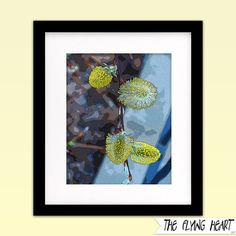 Printable wall art decor: Floral stylized photography, Pussy Willow, flower art, close up, yellow with texture  by TheFlyingHearts, $5.00