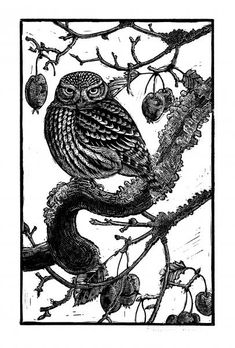Little Owl, linocut print