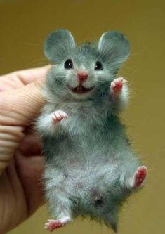 I wish I had a hamster! And its mickey hamster The Animals, Smiling Animals, Happy Animals, Felt Animals, Cute Baby Animals, Funny Animals, Cute Creatures, Beautiful Creatures, Animals Beautiful