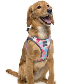 Ain't no bees in this cute hive!!  Our new FuzzYard Step In dog harnesses are the best solution for dogs who don't like things being put over their head. They are lightweight super comfortable and, best of all, easy to fit! Simply unclip the buckle, undo the Velcro and let your dog 'step in' and you're good to go!  Material: 100% Polyester. Secure D-ring to attach your dogs lead. Lifestyle Shop, Luxury Lifestyle, Dog Grooming Salons, Dog Steps, Dog Harness, Bees, Your Dog, Ring, Cute