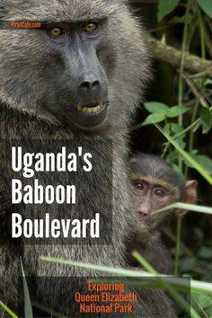 Exploring western Uganda's Queen Elizabeth National Park.
