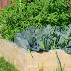 If You Use Vinegar in the Garden These 12 Miracles Can Happen Garden Plants Vegetable, Container Gardening Vegetables, Garden Soil, Lemon Plant, Diy Garden Projects, Garden Ideas, Growing Vegetables, Plant Care, Backyard Landscaping