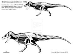 A T. rex named Sue 3.0 by ScottHartman.deviantart.com on @deviantART