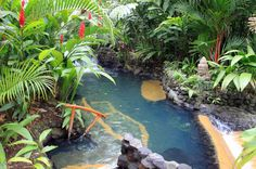 tabacon pool in shan gri la    - Costa Rica