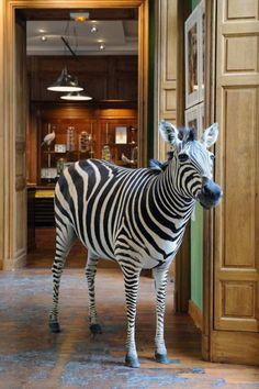 Deyrolle Museum, Paris
