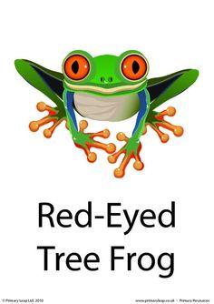 PrimaryLeap.co.uk - Red-eyed tree frog flashcard Worksheet